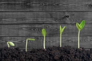 Plant, dirt, soil.